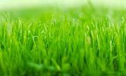 Посев газона. Укладка рулонного газона Красноярск